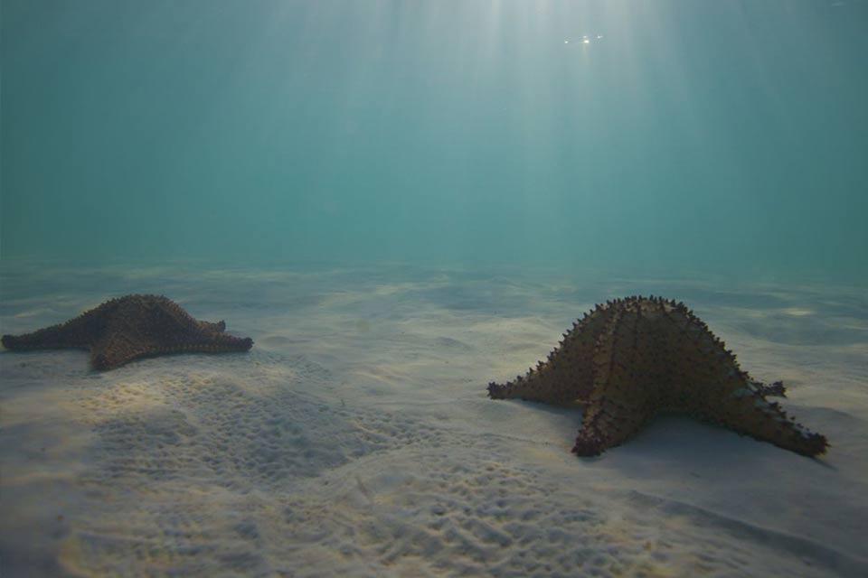 Paquete de 2 días de buceo en el Mar Caribe