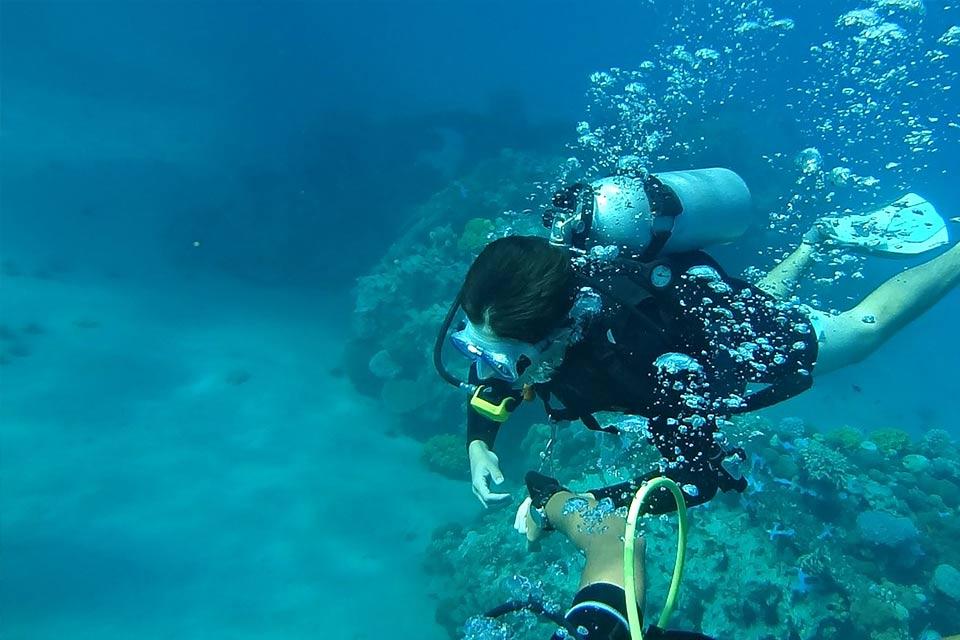 diving_dominicana_padi_dsd.jpg